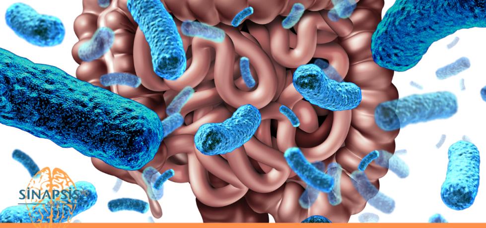 El descubrimiento de la barrera hemato-intestinal; protección contra miles de millones de bacterias.
