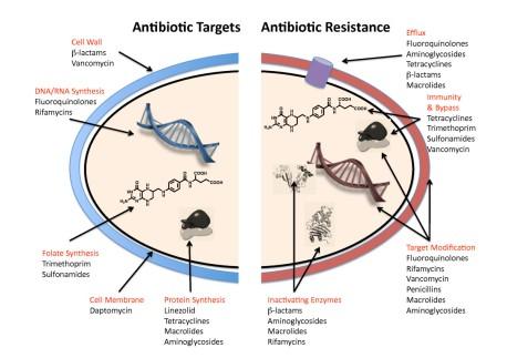 Antibiotic_resistance_mechanisms