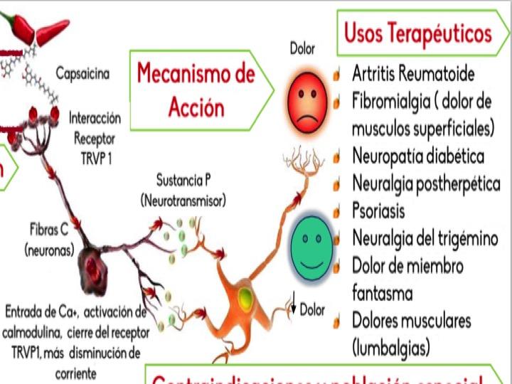 Qu es y c mo se usa la capsaicina sinapsismx - Como funcionan los emisores termicos ...