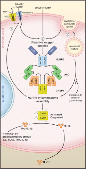 3_Models_of_NLRP3_Inflammasome_Activation